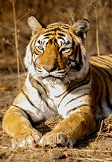 The Worlds Most Famous Tiger (2017)